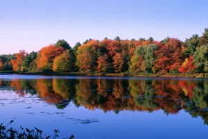 Autumn Trees at Walden Pond