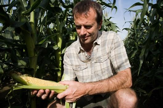 Man holding corn cob